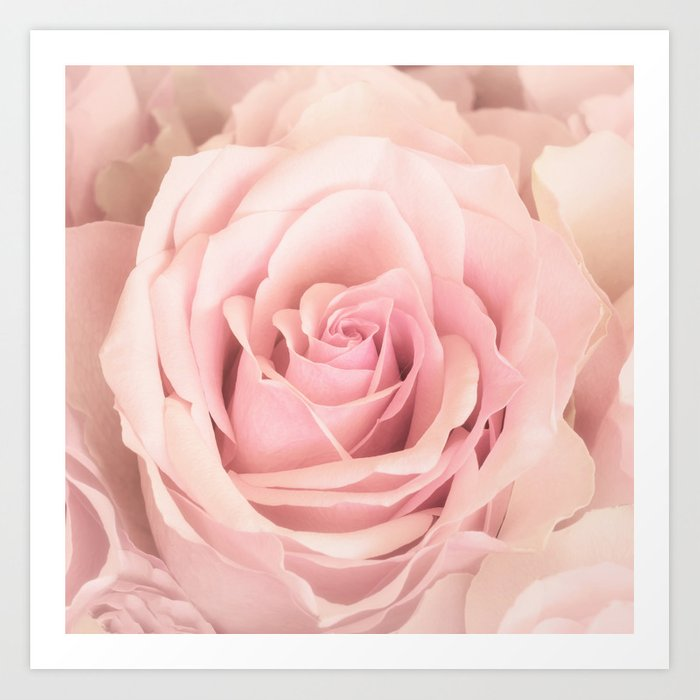 A rose is a rose - Wonderful pink Rose flower Art Print