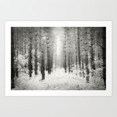 Into the Forest - Nr. 3 Art Print