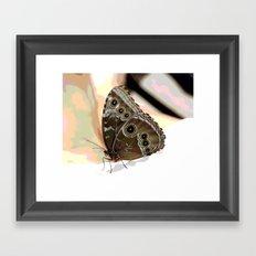 Bulls Eye Butterfly Framed Art Print