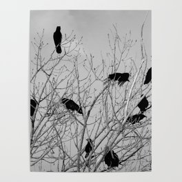 Murder Of Crows - Five Poster