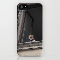 take me with you _ Beagle in a window iPhone (5, 5s) Slim Case