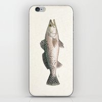 trout iPhone & iPod Skins featuring Spotted Sea Trout - Cynoscion nebulosus by Amber Marine