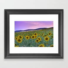 Sunflower dreams. Summer Framed Art Print