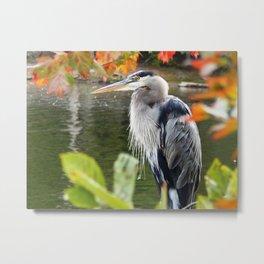 The heron waits Metal Print