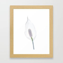 peace lily white flower - 142 Framed Art Print