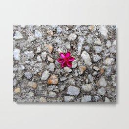 Pink Flower on Pebble Pavement Metal Print