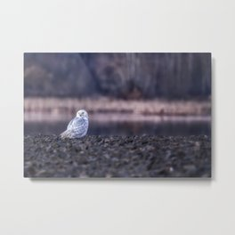 Turning Heads Metal Print