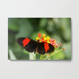 Beautiful buterfly, insect on green nature floral background, photographed at Schmetterlinghaus, But Metal Print