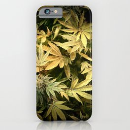 Yellow Cannabis Family iPhone Case