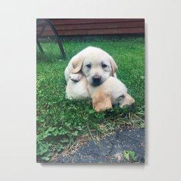Puppy Fever Metal Print