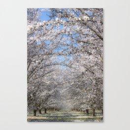 White Blossom Tree Tunnel Canvas Print