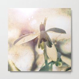 Snowdrops stretching towards the warm spring sun. Metal Print
