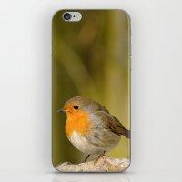robin iPhone & iPod Skins featuring Robin by Susann Mielke