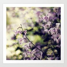 Lavender Breezes Art Print
