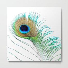 Peacock - Peacock Feather - Peacock Tail Feather Metal Print