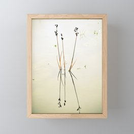 Reed Reflections Framed Mini Art Print