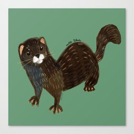 Shy European Mink Canvas Print