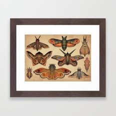 The Collection Framed Art Print