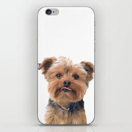 Yorkie Sticking Tongue Out | Dogs | Nadia Bonello iPhone Skin