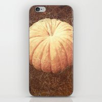 pumpkin iPhone & iPod Skins featuring Pumpkin by L Jehle   Yellowstone Photo  Studio