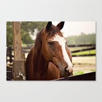 coco Canvas Prints featuring Coco by Images by Nicole Simmons
