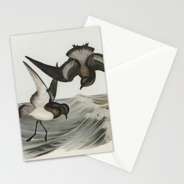Grey-backed Storm Petrel (Thalassidroma Nereis) illustrated by Elizabeth Gould (1804–1841) for John Stationery Cards