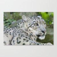 snow leopard Canvas Prints featuring Snow Leopard by PICSL8