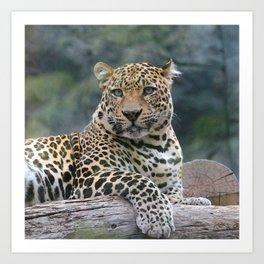 Aqua_Leopard_20180105_by_JAMColorsSpecial Art Print