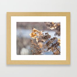 Sunlight through Dried Flowers Framed Art Print