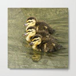 Three little ducks  Metal Print