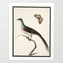 Bird studies, India, Murshidabad, Company School, late 18th early 19th century Art Print