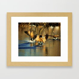 Canadian Geese: Three's a Crowd Framed Art Print