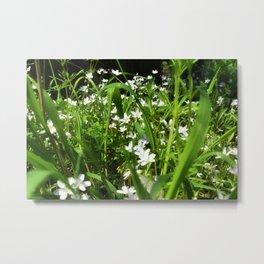 Spring Beauty 13 Metal Print