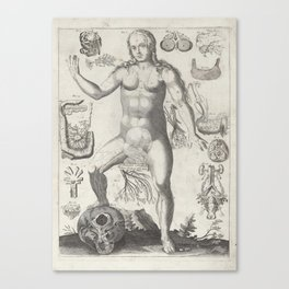 Female Anatomical Medical Chart from 1702 Canvas Print