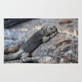 Galapagos baby marine iguana Rug