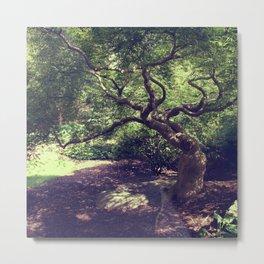 Japanese Garden Tree at Hershey Gardens Metal Print