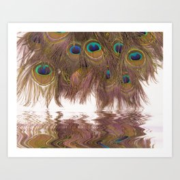 Reflections Of Peacock Feathers Art Print