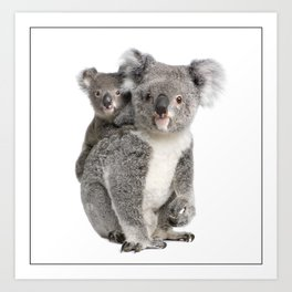 Koala Art Prints Society6
