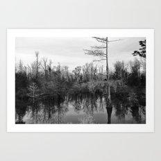 Mississippi Swamp Art Print