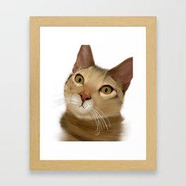 Joey Kitten Framed Art Print