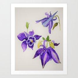 Aquilegia Flower Art Print