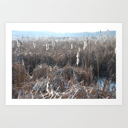 From a walk in Massachusetts.  Art Print