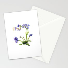Statice Flower Dissection Stationery Cards