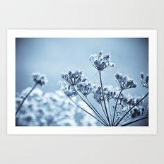 meadow beauty Art Print