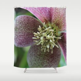 Hellebore Flower Shower Curtain
