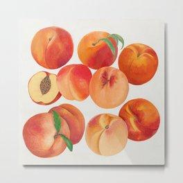 Nectarines Metal Print