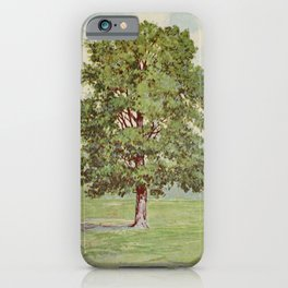 Vintage Print - Familiar Trees and Leaves (1911) - Hickory or Shagbark iPhone Case