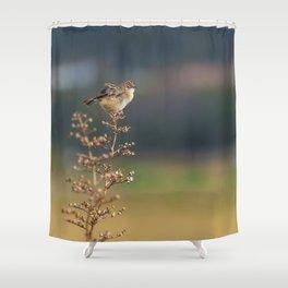 The little bird Shower Curtain