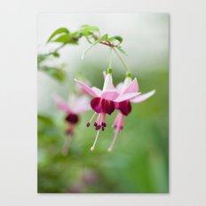 Fuchsia  8686 Canvas Print