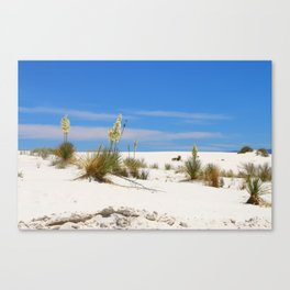 Soap Yucca At White Sand Canvas Print